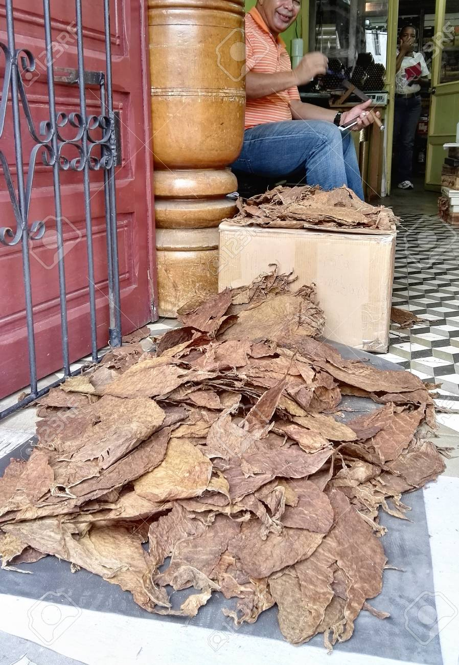 Cigar shop in the Dominican Republic  A pile of tobacco leaves