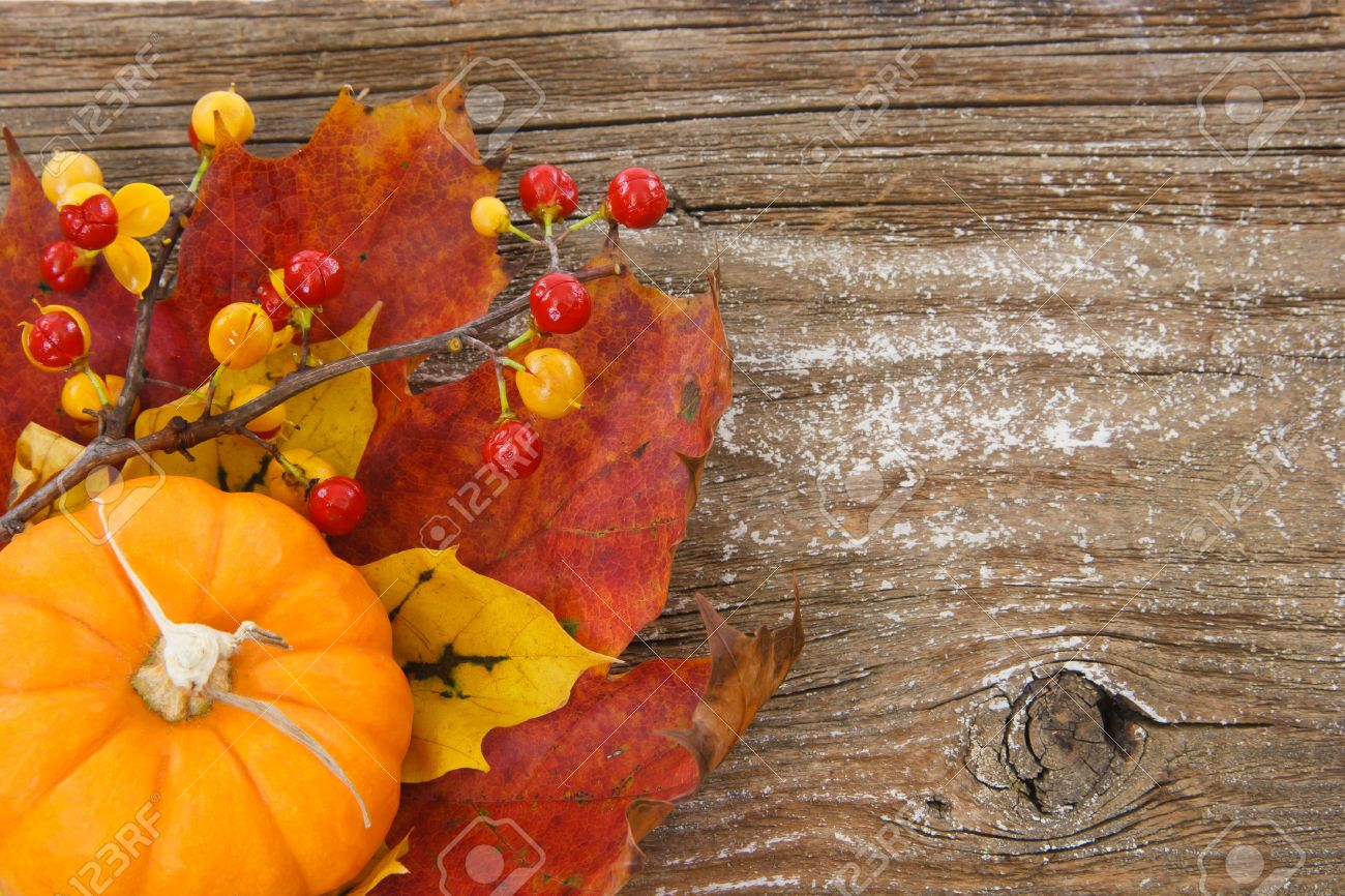 A Country Inspired Image With Pumpkin Leaves And Bittersweet Berries In Lower Left Against