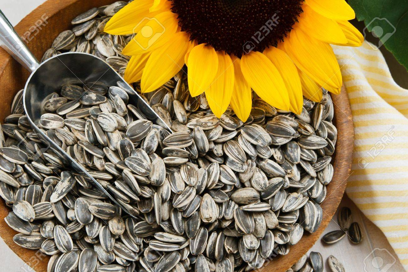 Image result for images of sunflower seeds