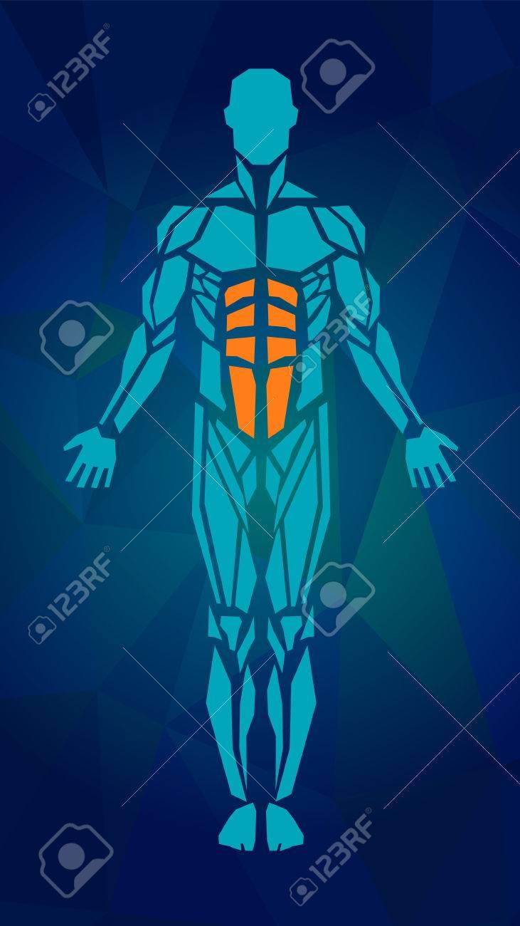 Polygonal Anatomie Des Männlichen Muskel-System, Bewegung Und ...