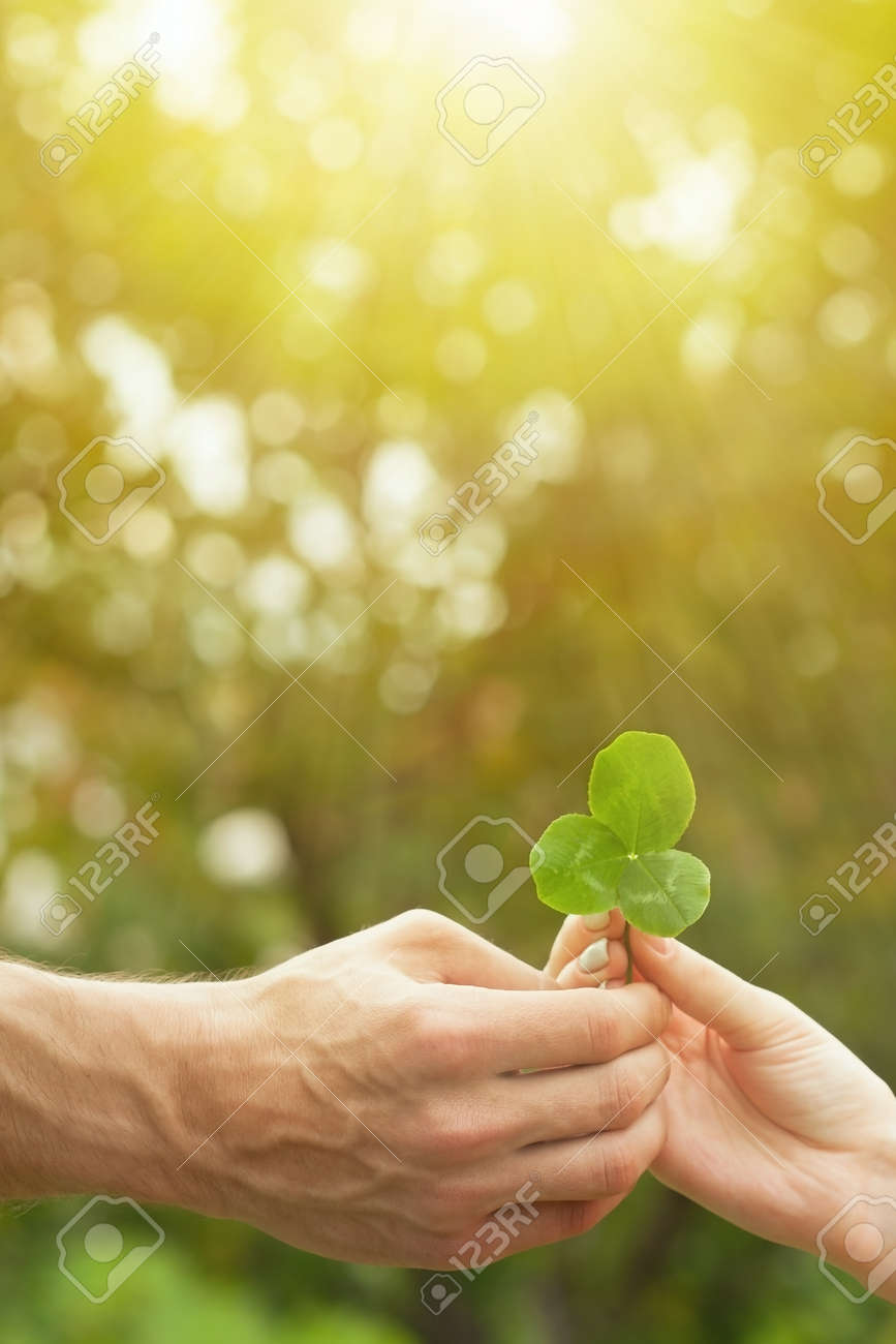 Close up of a hand holding a clover leaf and giving a leaf with natural background. Three-leaf clover in hand background. Male and female hands hold a clover trefoil. Green shamrock. - 156333462