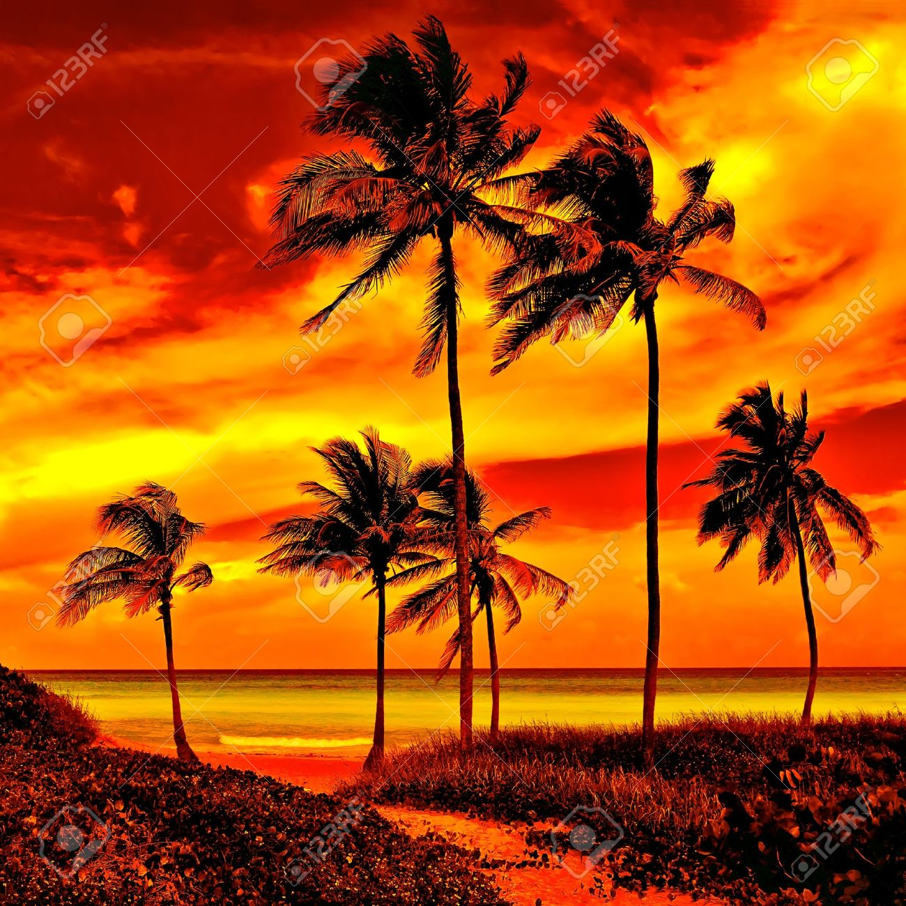Very colorful sunset  on a beautiful tropical beach Stock Photo - 11116389