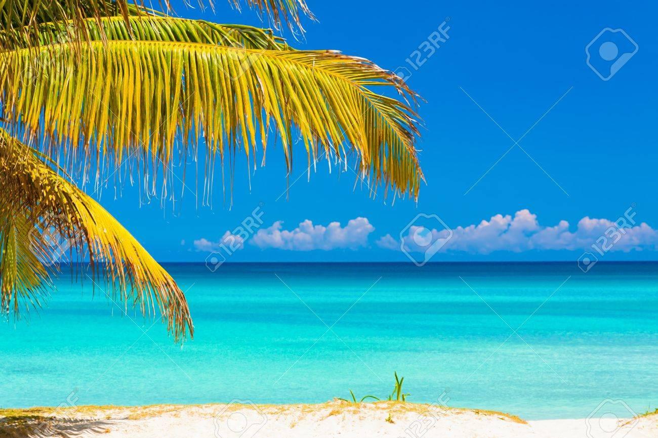Hojas De Palmera Enmarcar Una Foto De Una Playa Idílica Tropical En ...