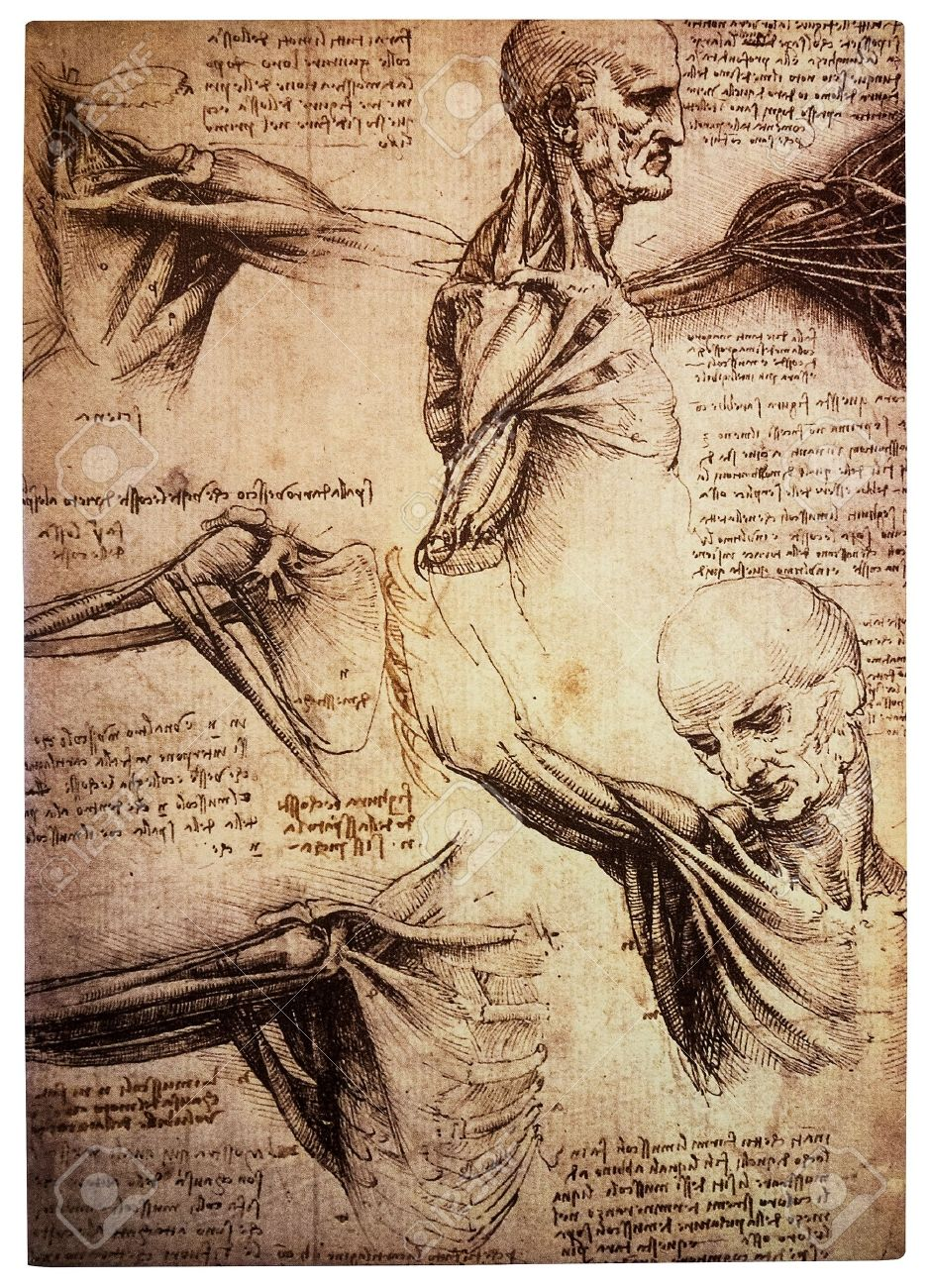 Ancient Drawings By The Renaissance Artist And Scientist Leonardo