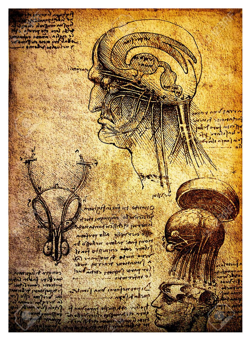 Ancient Anatomical Drawings Made By Leonardo DaVinci, A Study ...