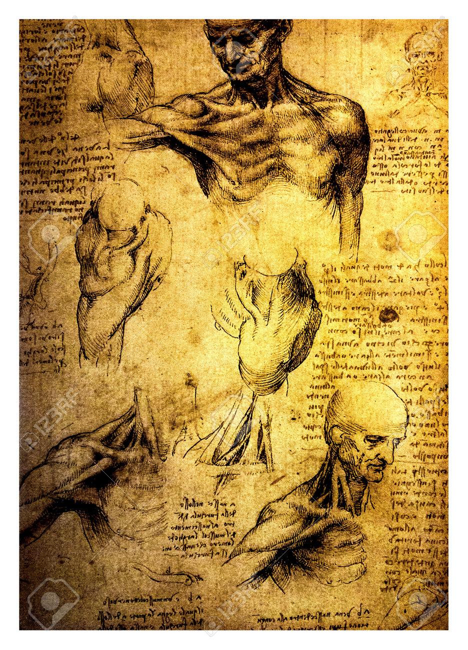Antiguos Dibujos Anatómicos Realizados Por Leonardo Da Vinci, Un ...
