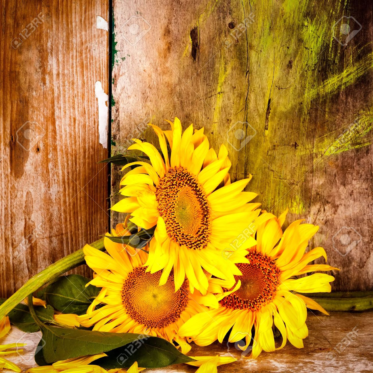 Jpg X Rustic Sunflower Background
