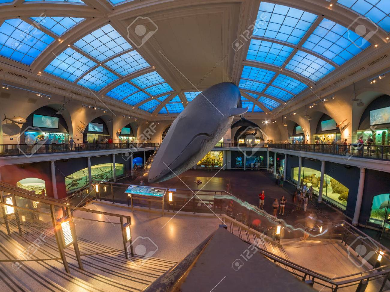 Marine life room at the American Museum of Natural History in New York - 48942699