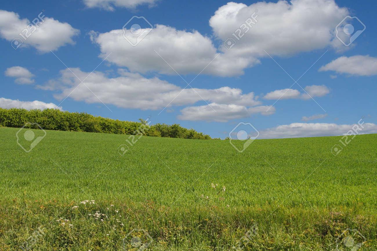 summer landscape Stock Photo - 472202