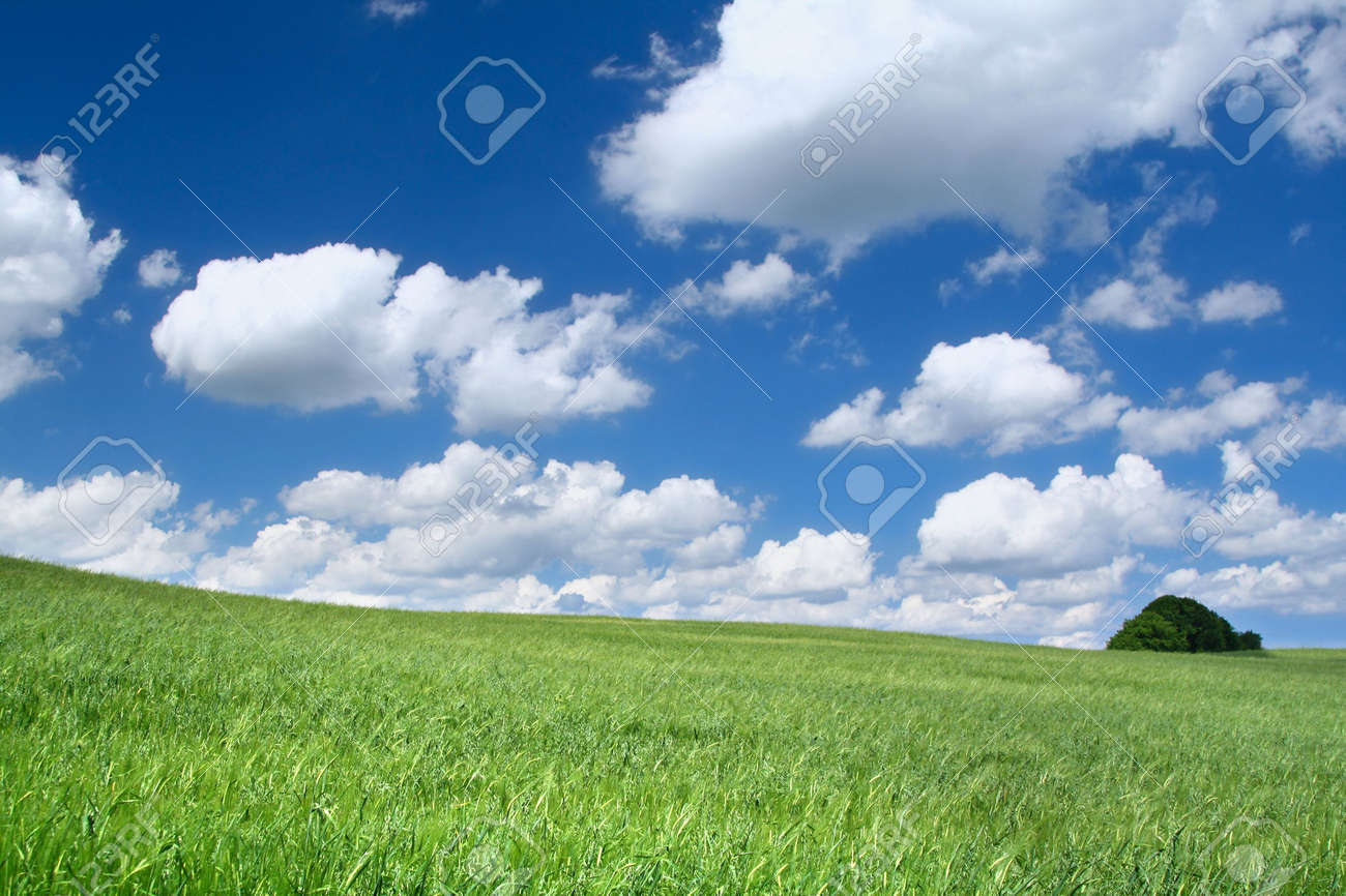 summer field with cumulus clouds, focus set in foreground Stock Photo - 2268627