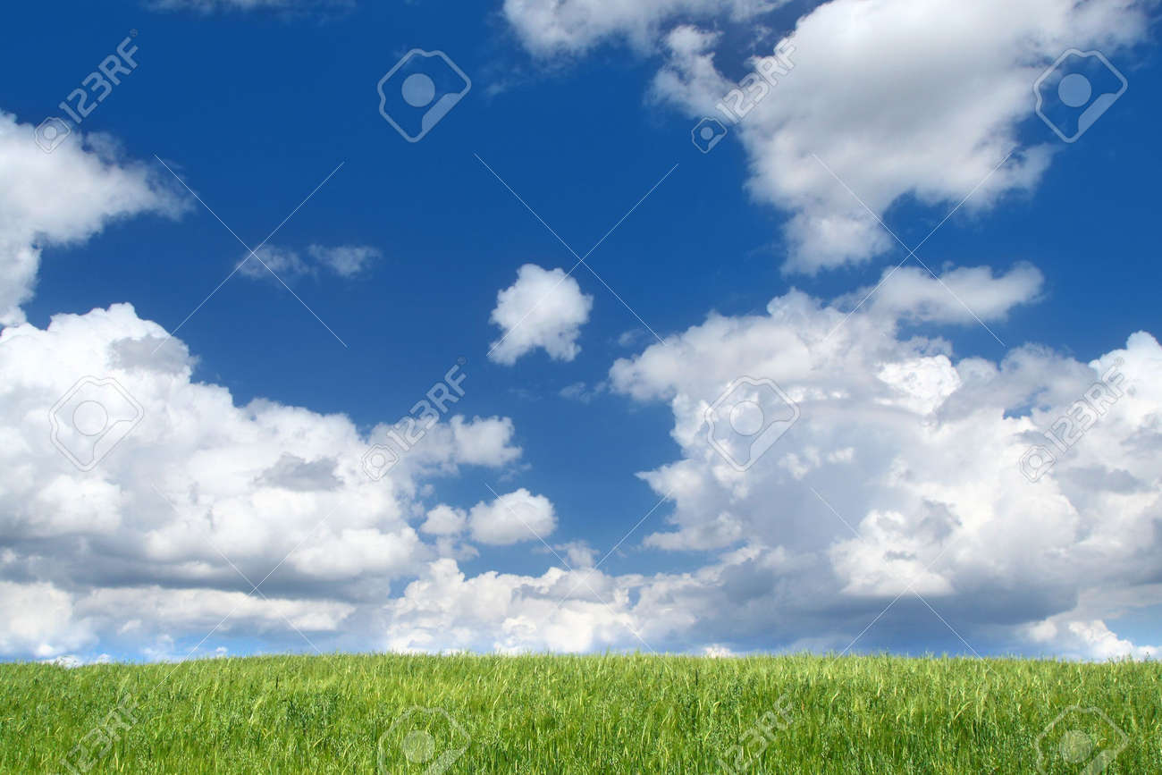 field with cumulus clouds, focus set in foreground Stock Photo - 2328787