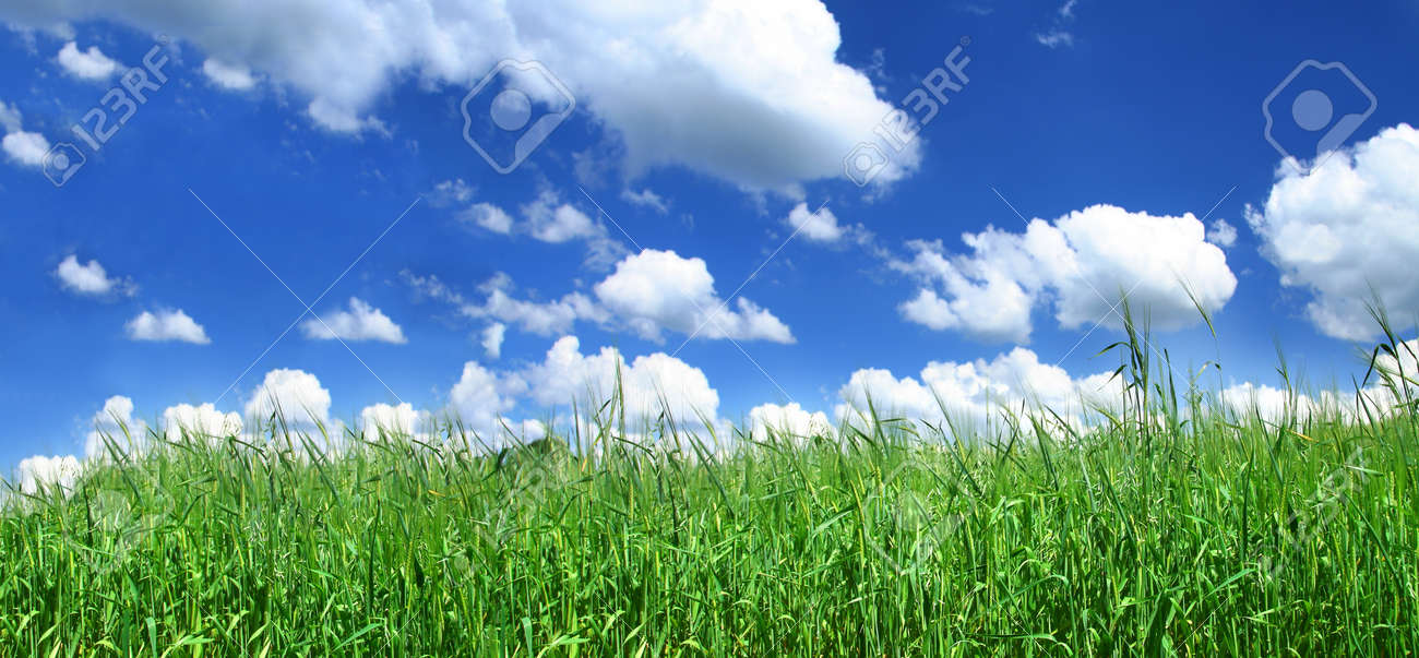 panoramic view of blissful grassland Stock Photo - 16688992