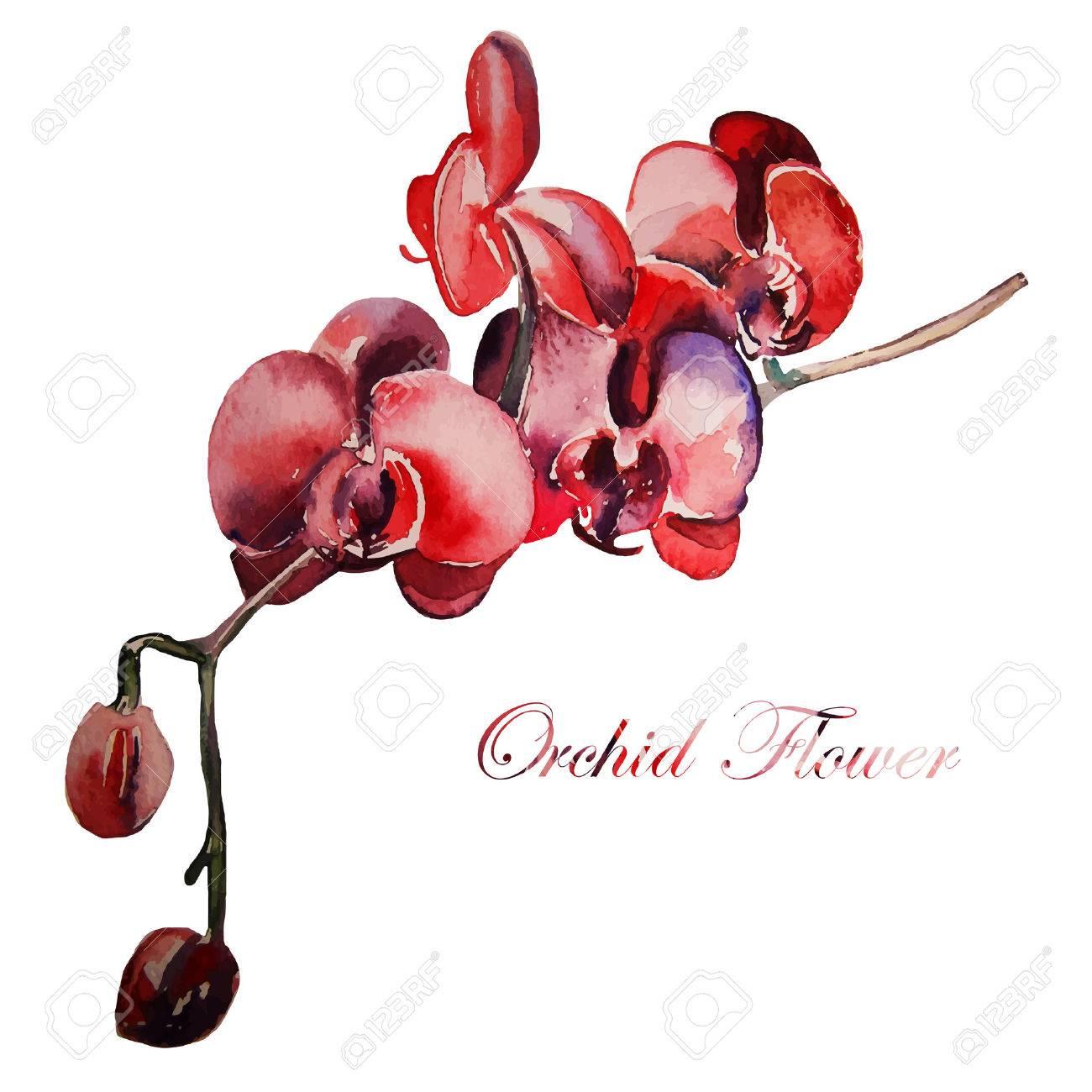 Orchidee Fleur Aquarelle Dessin A La Main Clip Art Libres De