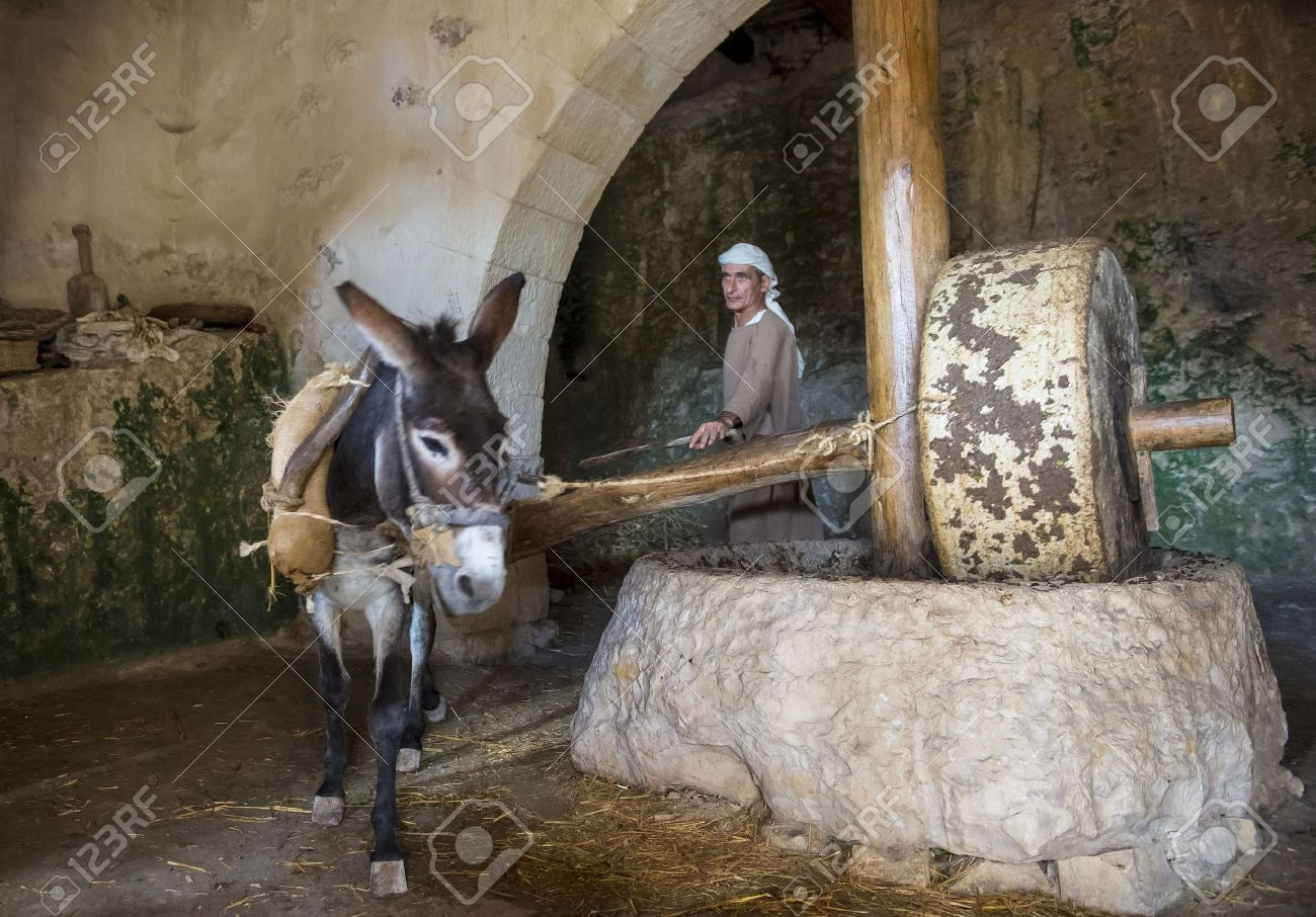 NAZARETH, ISRAEL - OCT 15 : Millstone & donkey used for pressing olives to make olive oil in October 15 2012 at Nazareth Village, a historical re-creation of Nazareth as it was at the time of Christ - 16532499