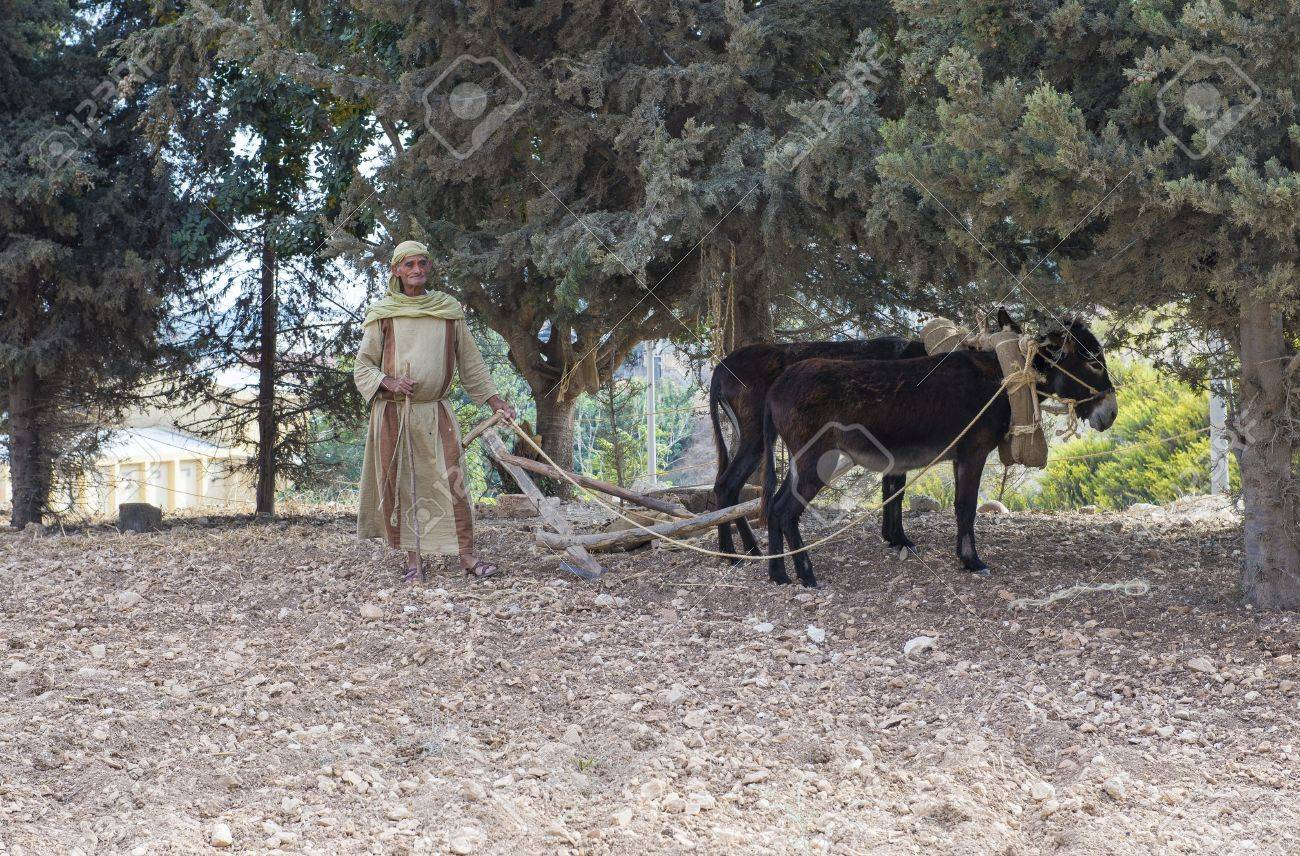 NAZARETH, ISRAEL - OCT 15 : Palestinian farmer plowing a field with his donkeys in October 15 2012 at Nazareth Village, historical re-creation of Nazareth as it was at the time of Christ Stock Photo - 17003755