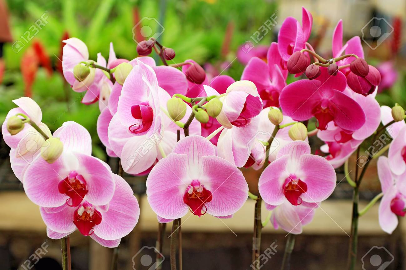 images for orchidsflowers