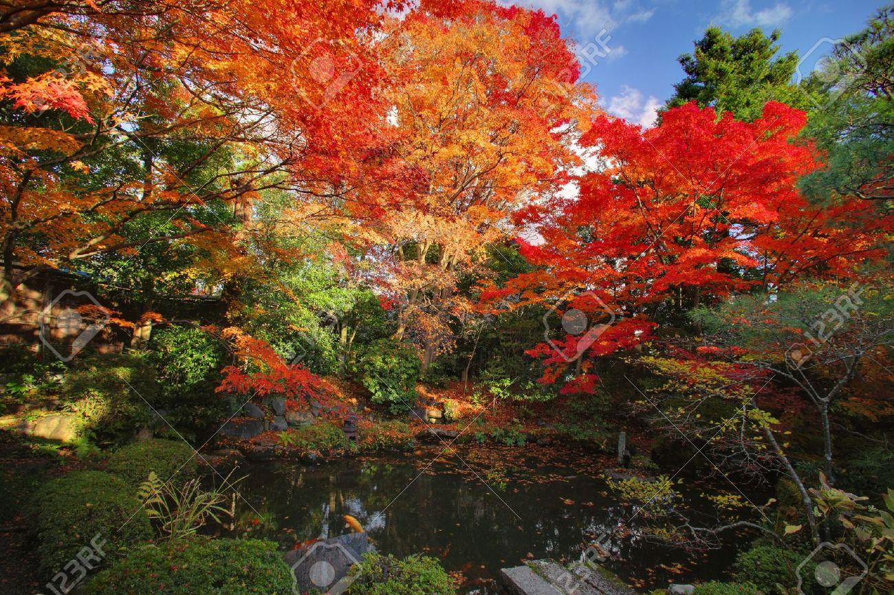 Autumn Japanese garden with maple in Kyoto,Japan Stock Photo - 6464771