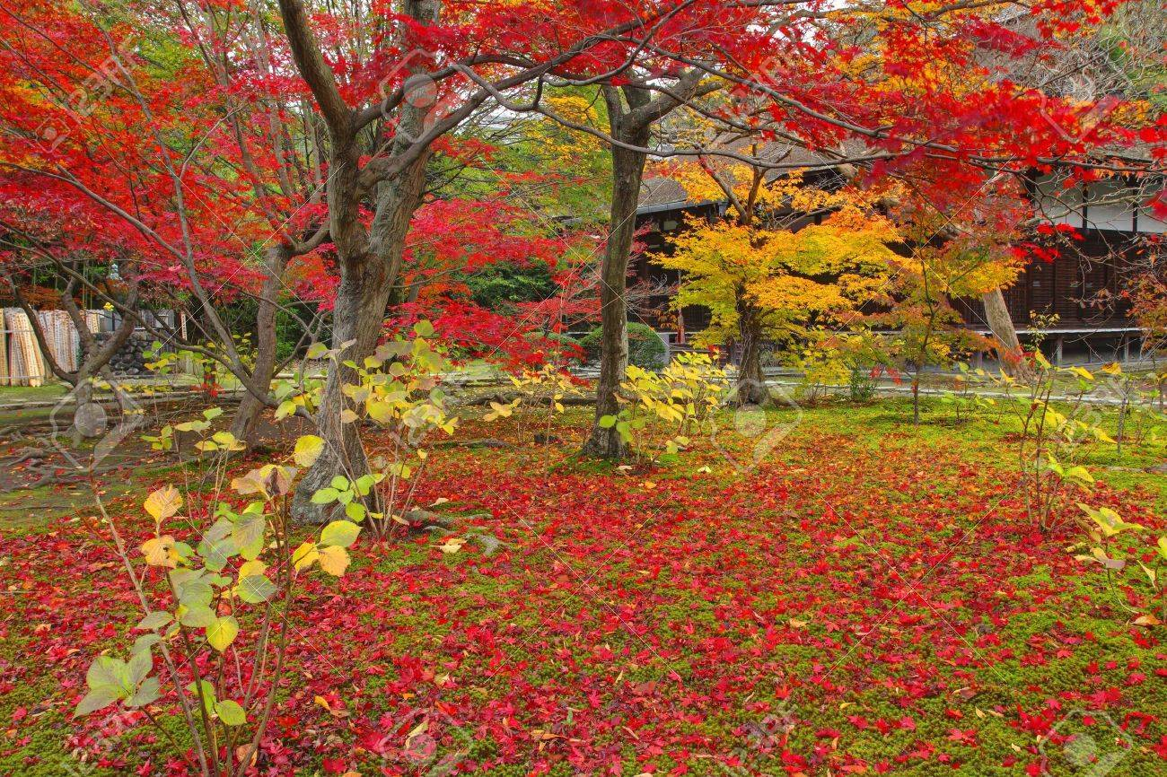 Autumn Japanese Garden With Maple In Kyoto,Japan Stock Photo ...