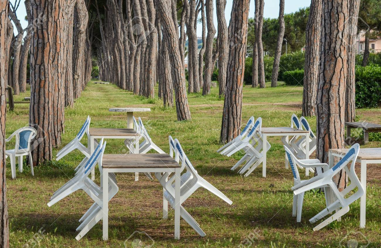 Stock Photo   The Italian Park View   Pine Tree Trunks And Empty Tables  Chairs