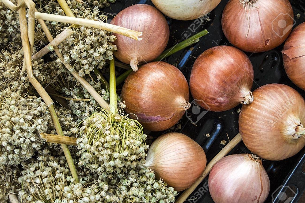 Onion Seeds, Dried Onions And Seeds, Seeds To Grow Dry Onions, Stock Photo,  Picture And Royalty Free Image. Image 86497164.