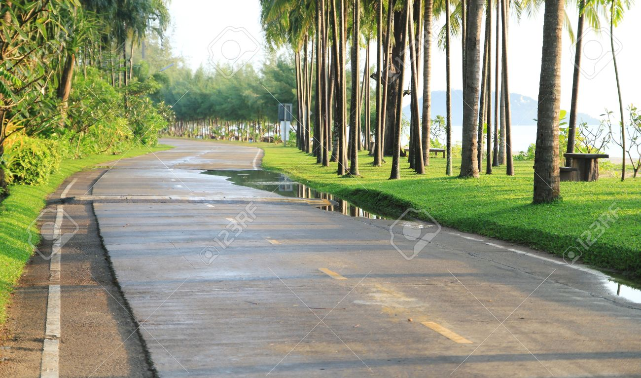 A Road Between Beautiful Garden, Palm Tree And Green Grass, Sea ...