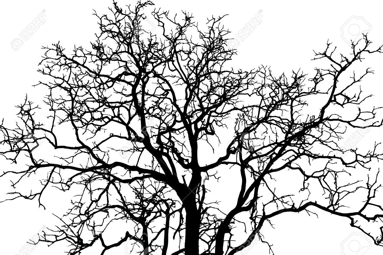 tree branch black shadow royalty free cliparts vectors and stock rh 123rf com free vector tree branch free vector tree branch