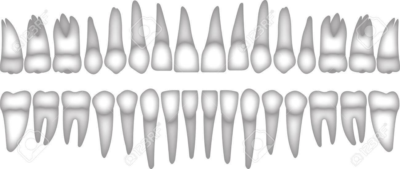 3d Conjunto De Dientes Humanos Iconos Isométrica Del Vector ...