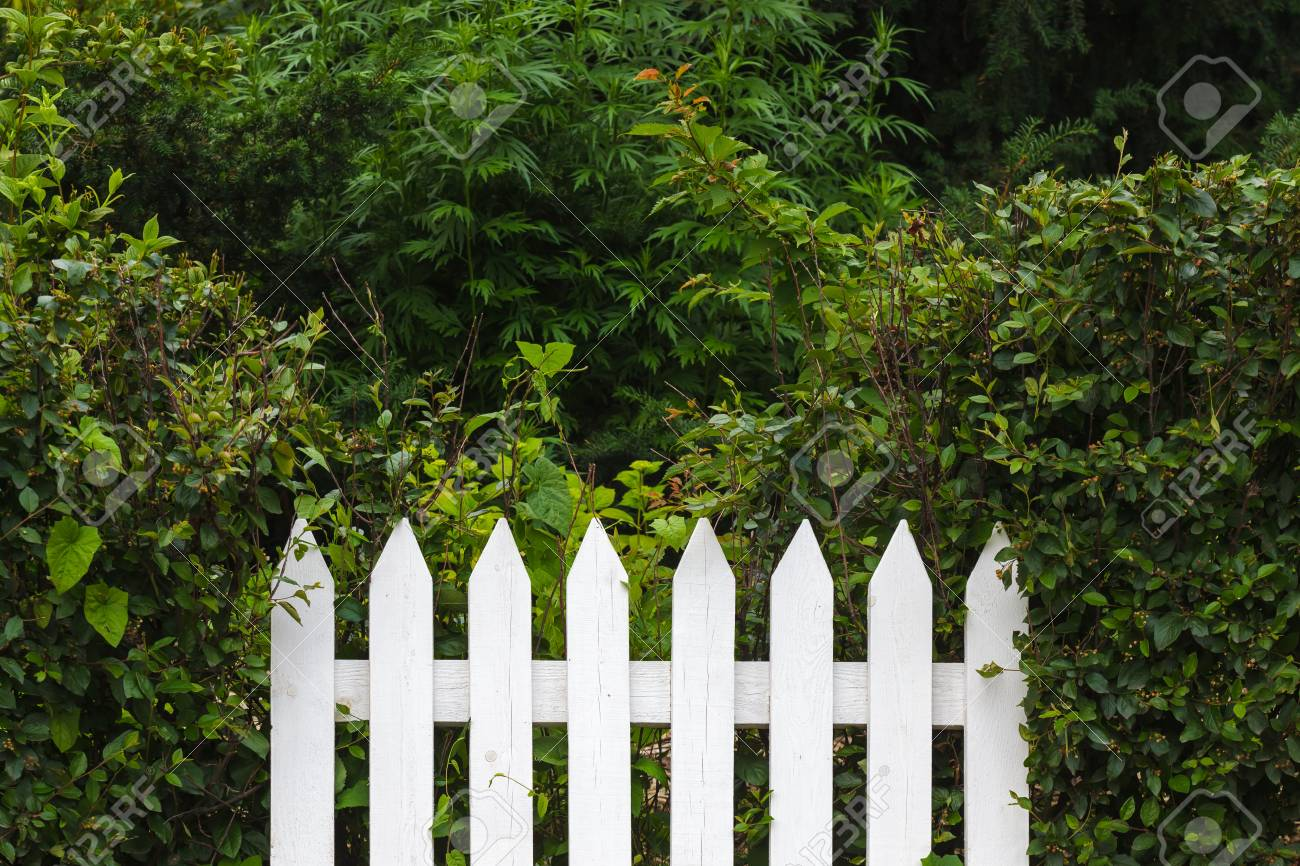 weißer zaun auf hintergrund der grünen büsche lizenzfreie fotos