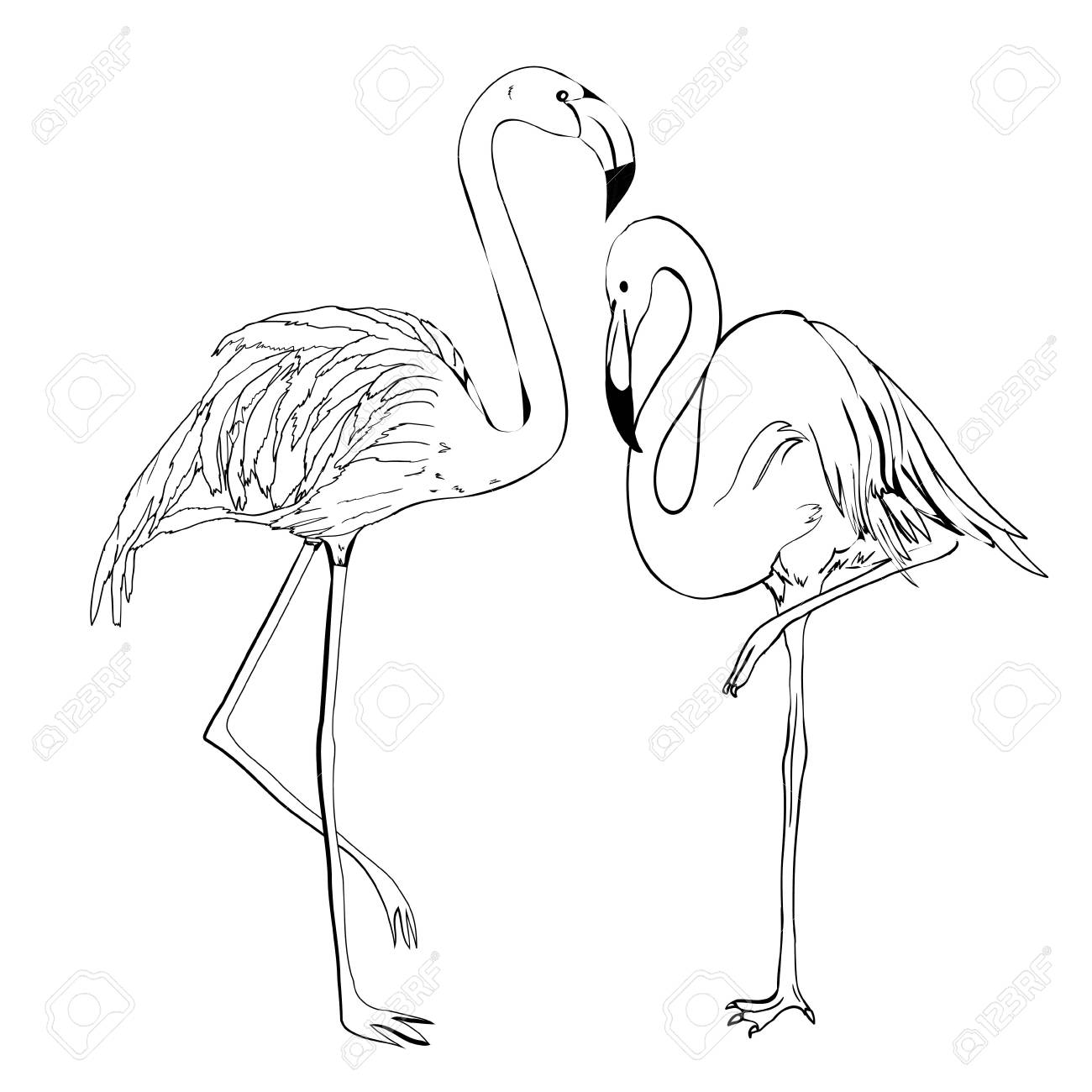 Flamingo Hand Draw Royalty Free Cliparts Vectors And Stock