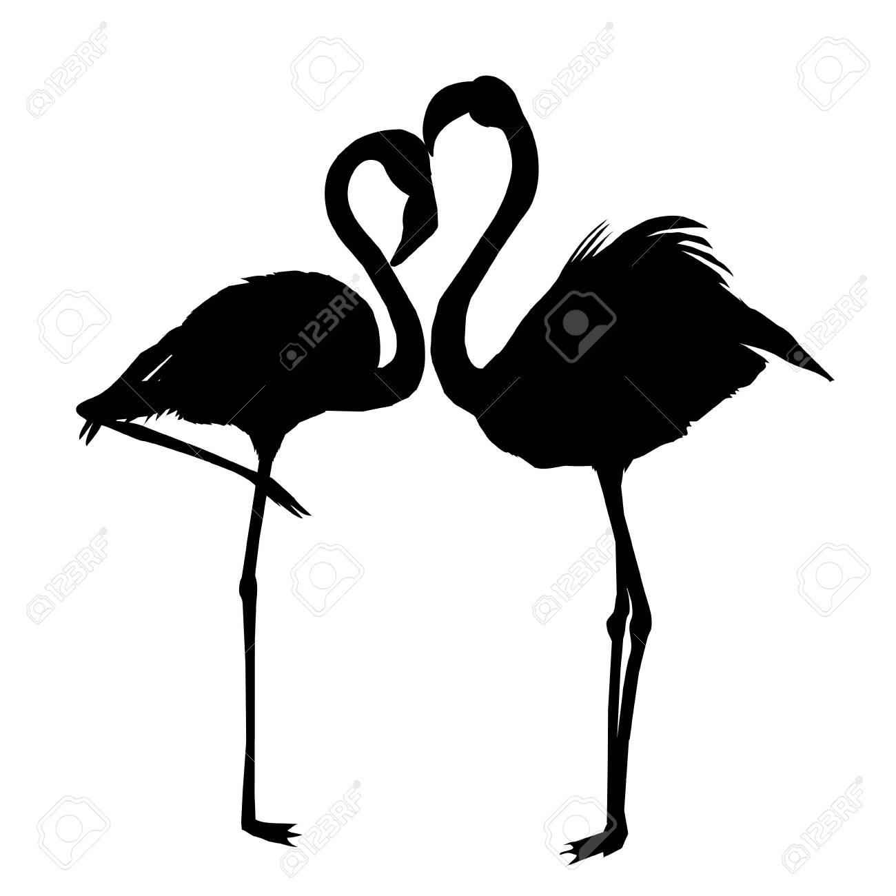 Flamingo Vector Drawing Pink African Beak Beauty Leg Wildlife
