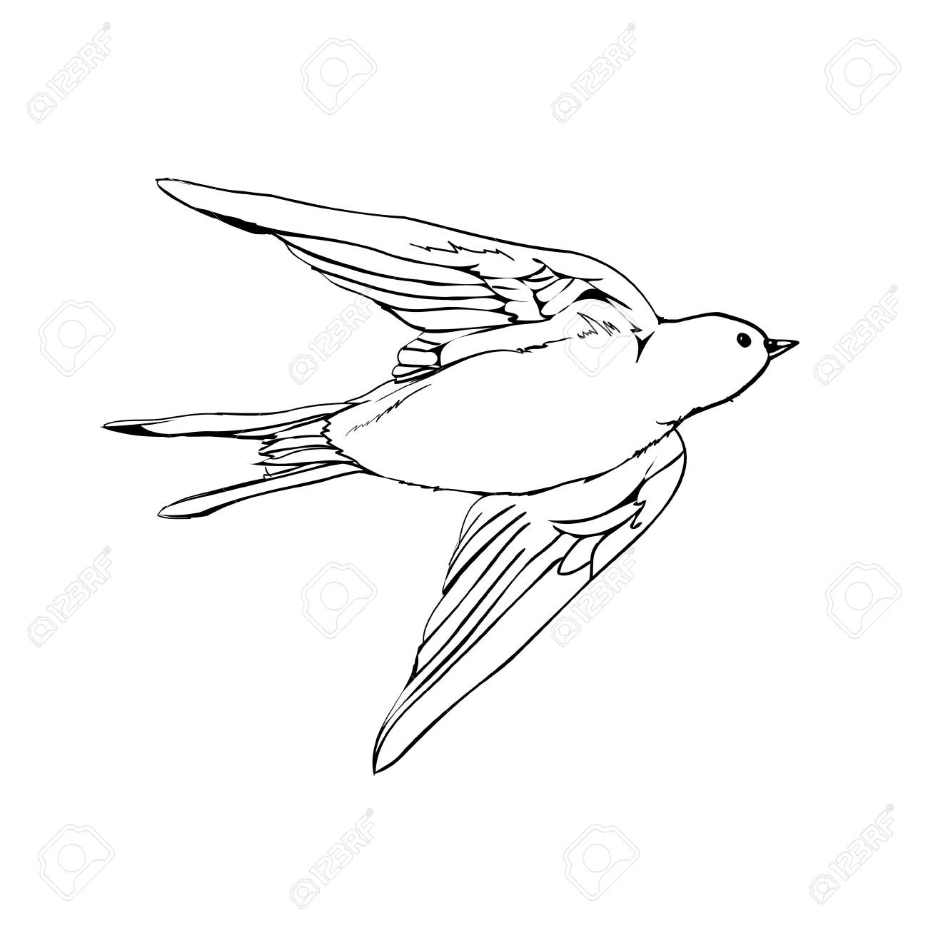 Vector swallows vector drawing of a series of monochrome sketches birds