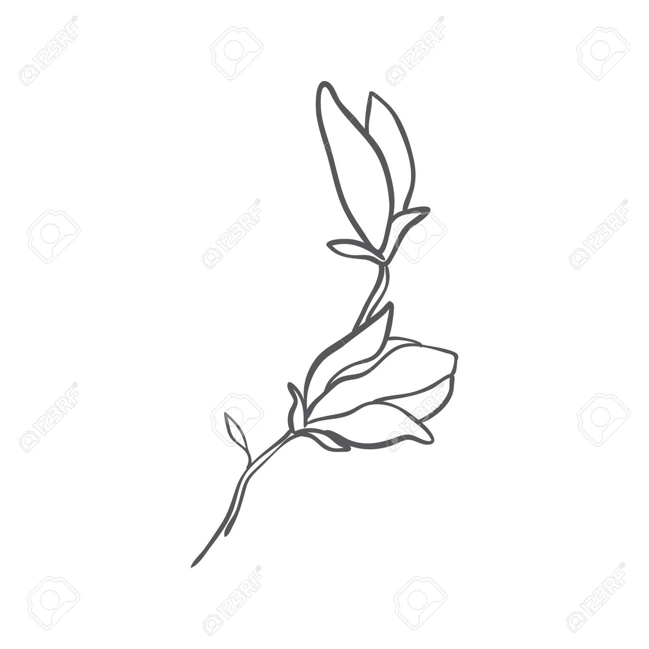 Sketch of graphic hand-drawn magnolia flower on a white background. Vector illustration. - 168291265