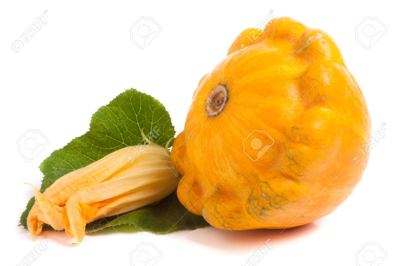 Yellow pattypan squash with leaf and flower isolated on white stock photo yellow pattypan squash with leaf and flower isolated on white background mightylinksfo