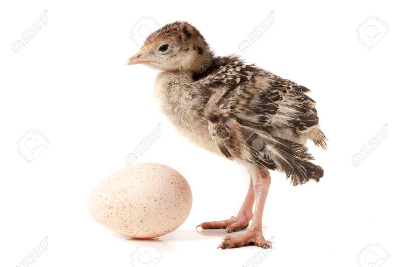Beste Anatomie Der Hühner Ideen - Physiologie Von Menschlichen ...