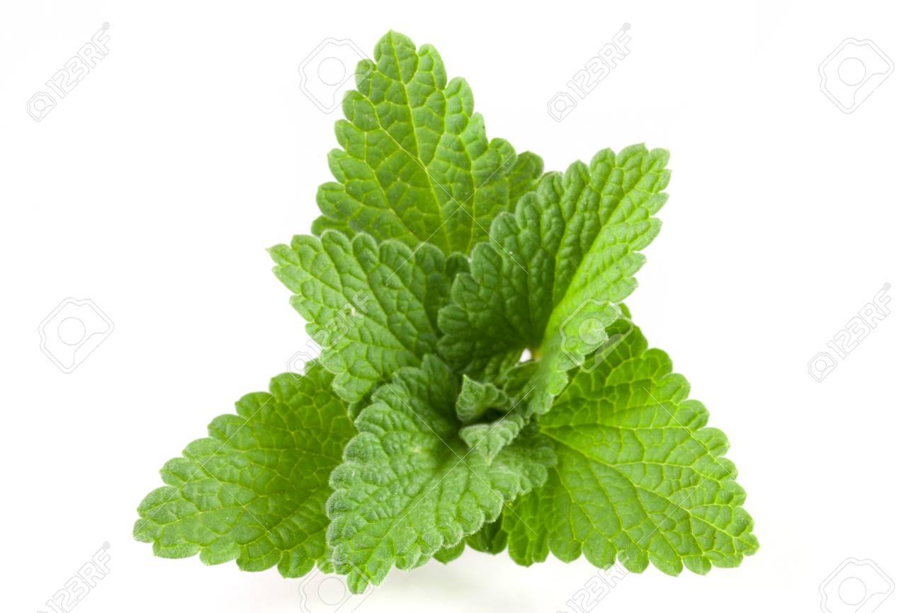Melissa leaf or lemon balm isolated on white background - 78631508