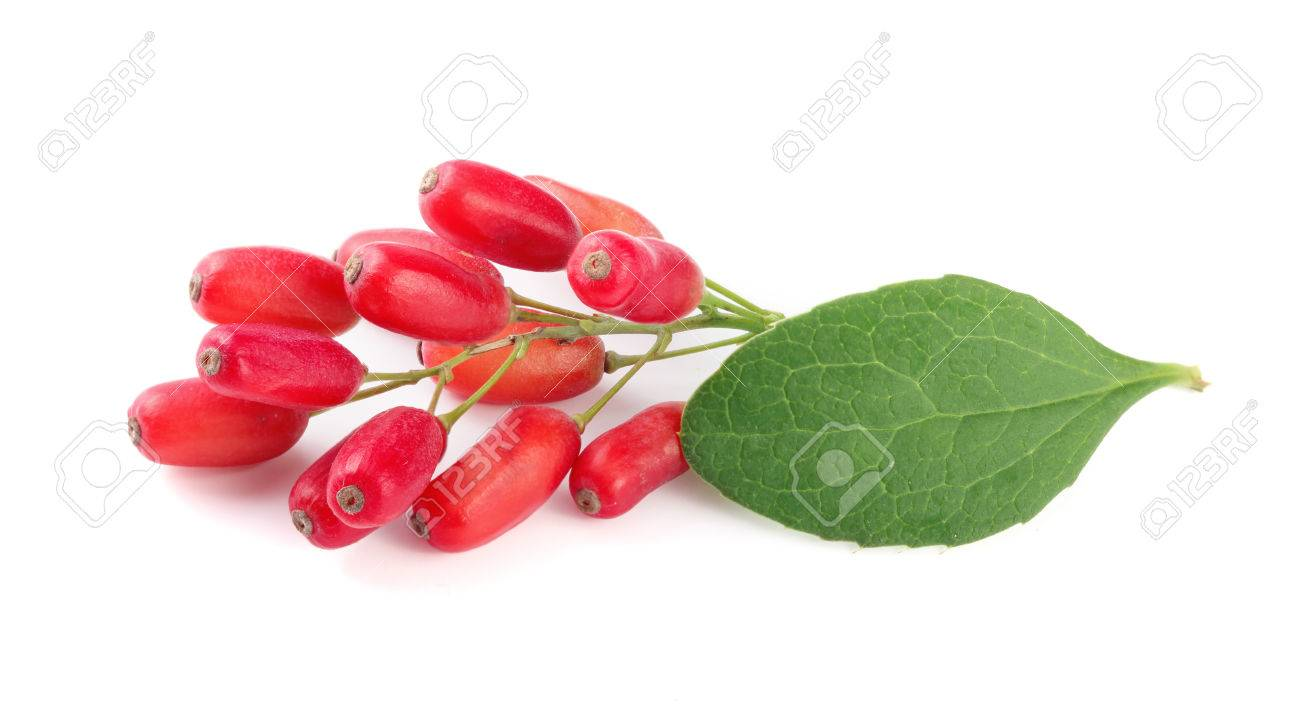 fresh barberry twig with leaves isolated on a white background - 85488629