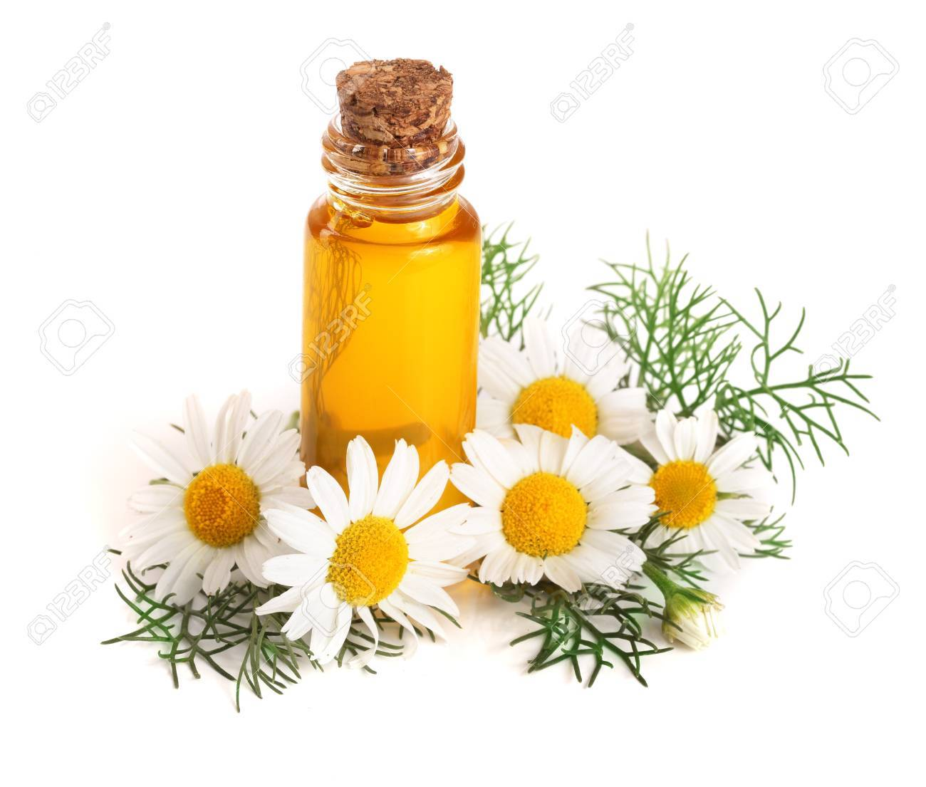 bottle with essential oil and fresh chamomile flowers isolated on white background - 89122584