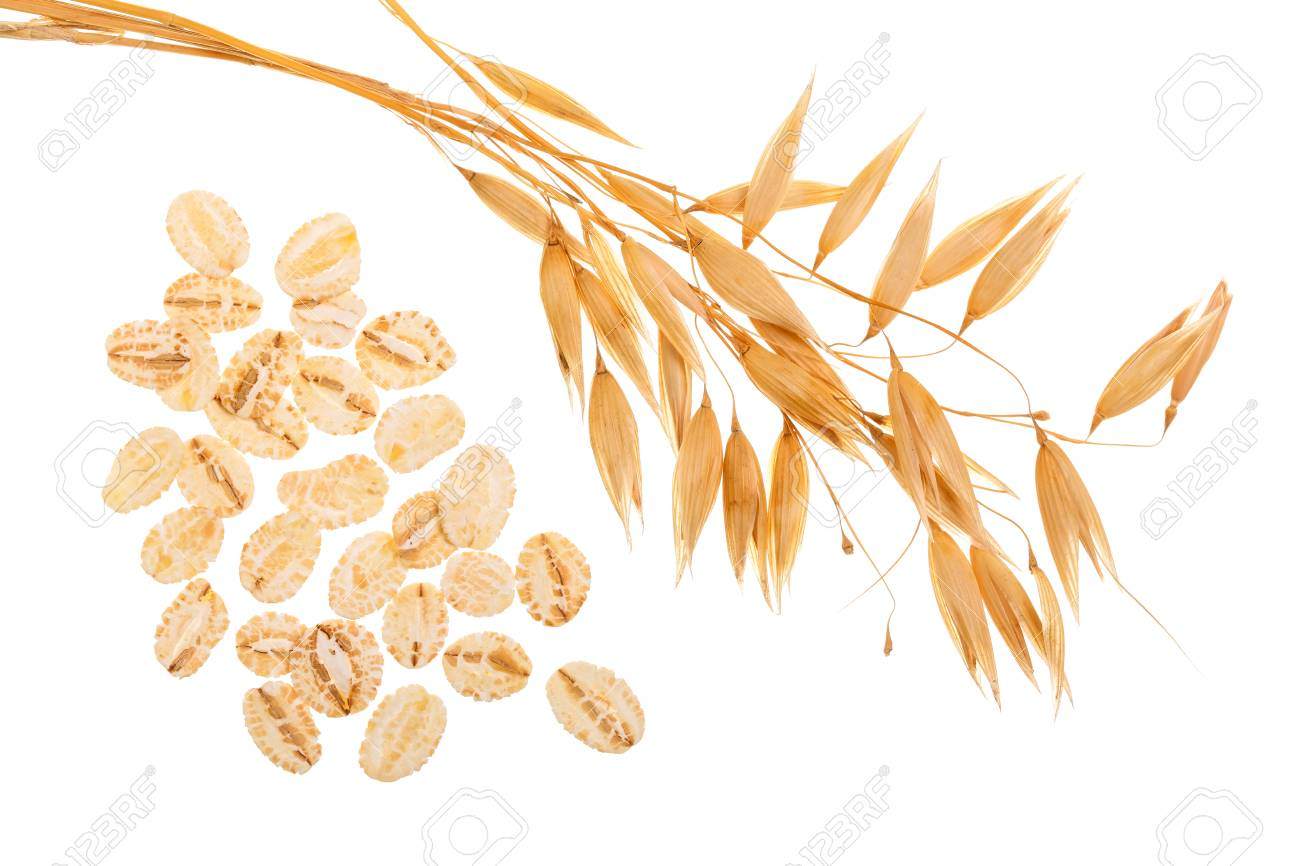 oat spike with oat flakes isolated on white background. Top view - 97101488