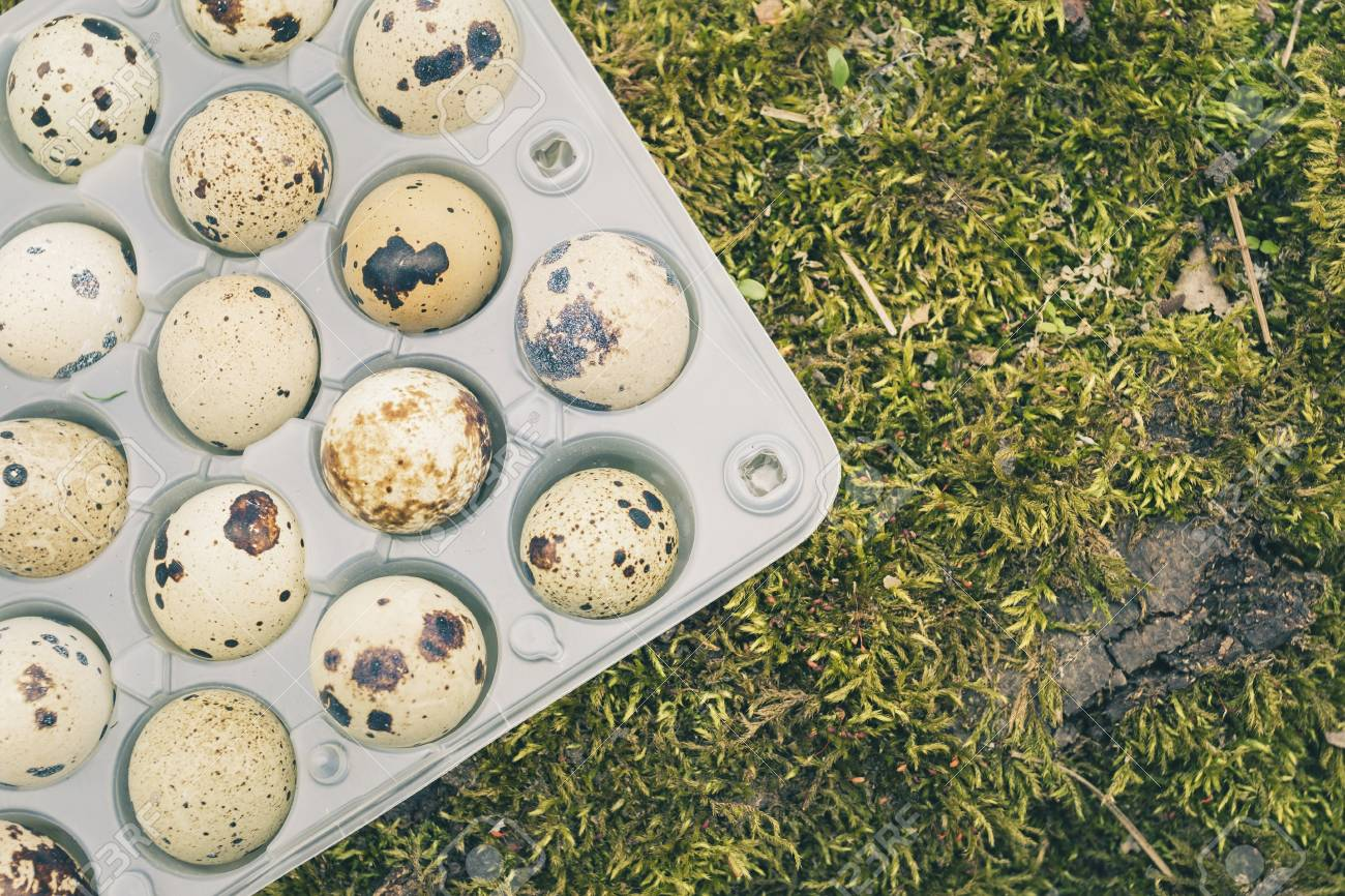 Quail eggs in a transparent plastic container on green moss in spring forest. Natural healthy food concept. Banque d'images - 85542286