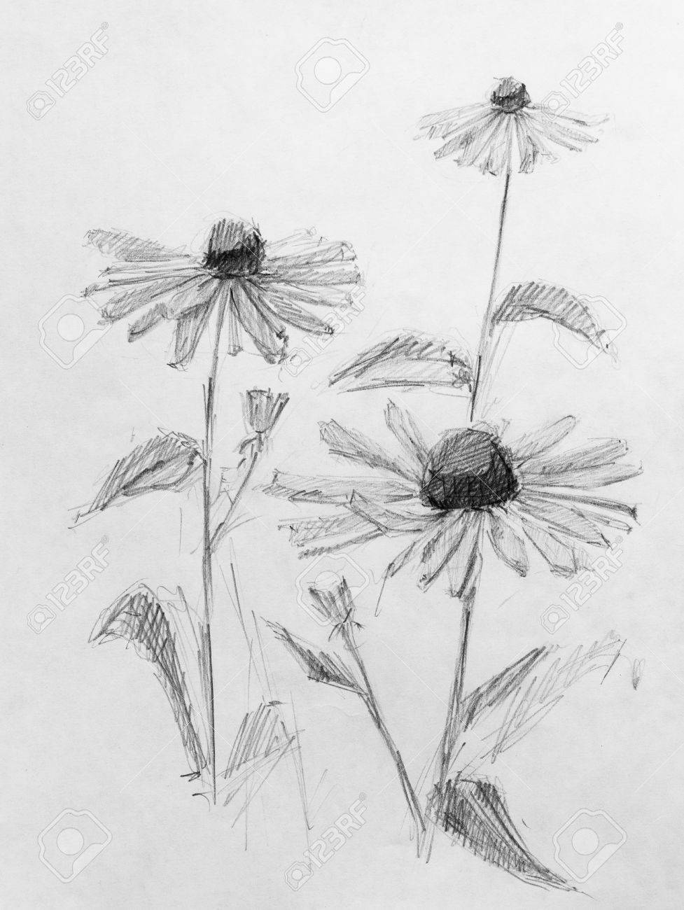 Flowers pencil sketch stock photo 44245204