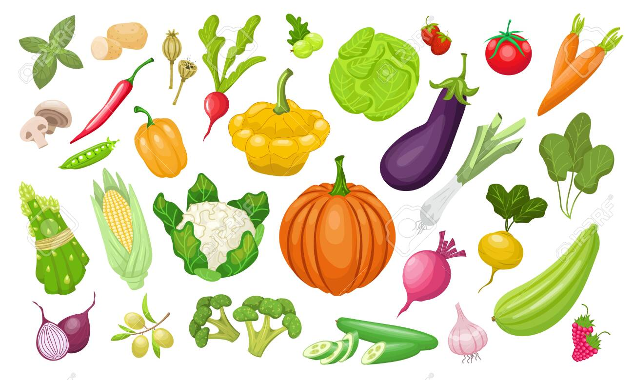 A large set of vegetables. Fresh tomatoes, peppers, pumpkin, paprika, zucchini, corn, carrots, peppers , peas, cabbage, broccoli. Vegeterian organic vector food in flat style. Farm healthy products. - 146211209
