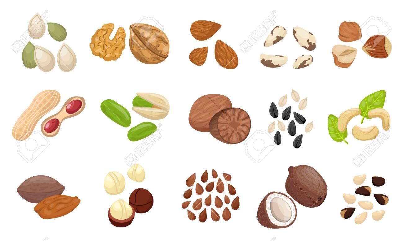 Nut seed set. Slices nuts pistachio peanuts brazilian hazelnut pumpkin seeds sunflower flaxseed almonds pecans cocoa beans mocadamia cashews coconut cedar. Organic color raw food vector. - 146689235