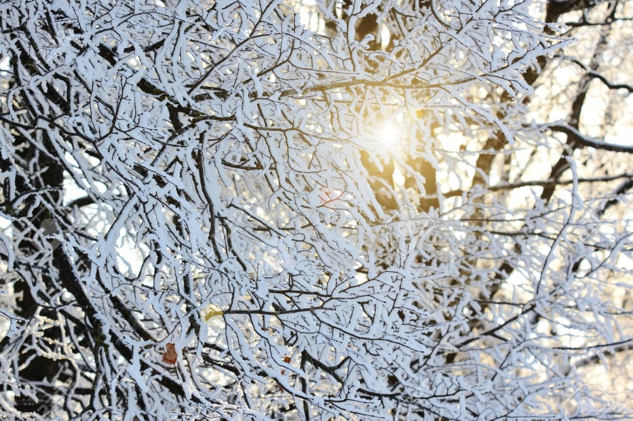 Winter landscape, tree in snow Stock Photo - 8846953