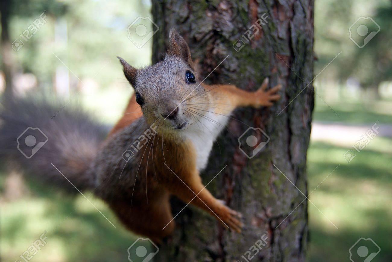 Northwestern Coniferous Forest Animals - Best Image Atlproms.com