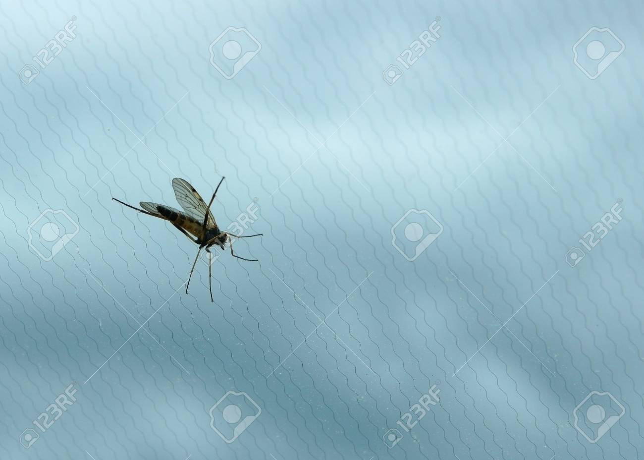Mosquito on a background of a grid and clouds Stock Photo - 13986361