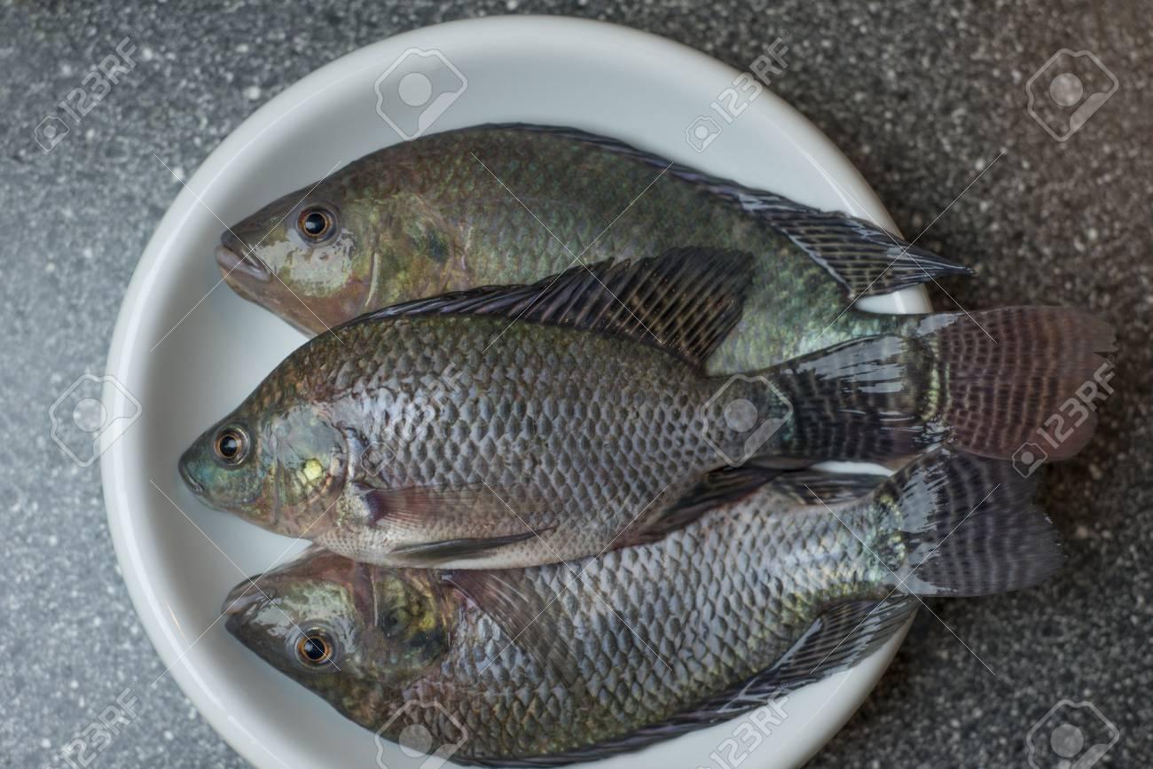 que es tilapia pescado