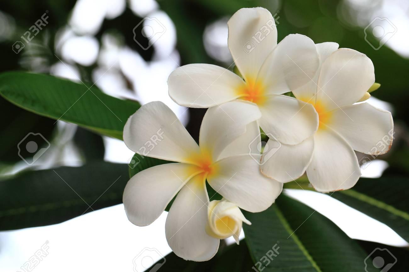 Flower Stock Photo - 20163404