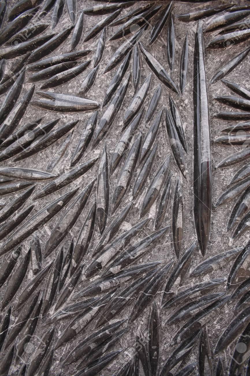 Nero D Africa Marmo marmo nero fossile nero di marocco, lastra rocciosa fossile orthoceras in  età devoniana - marocco, africa