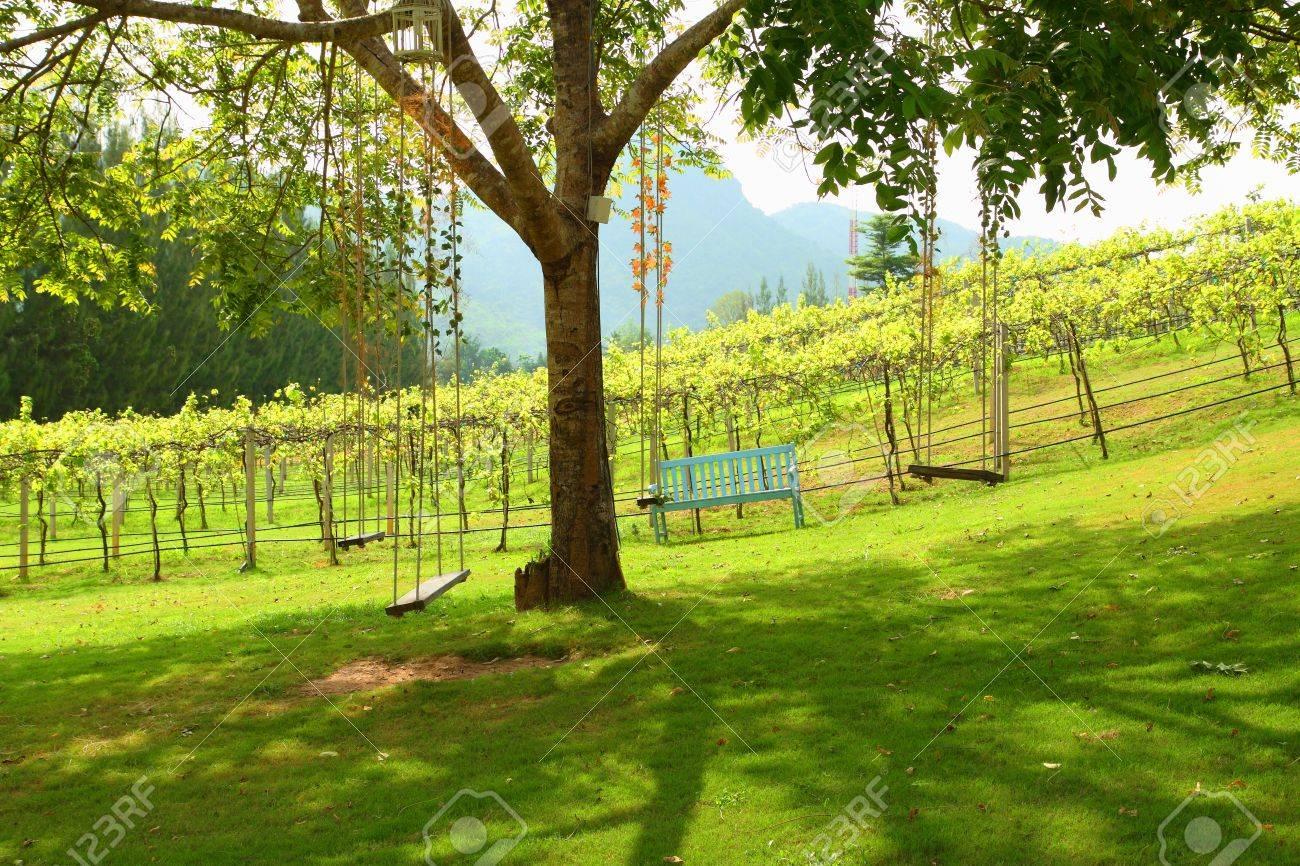 Tree Swing Many Old Wooden Tree Swing In Vineyard Background Stock Photo