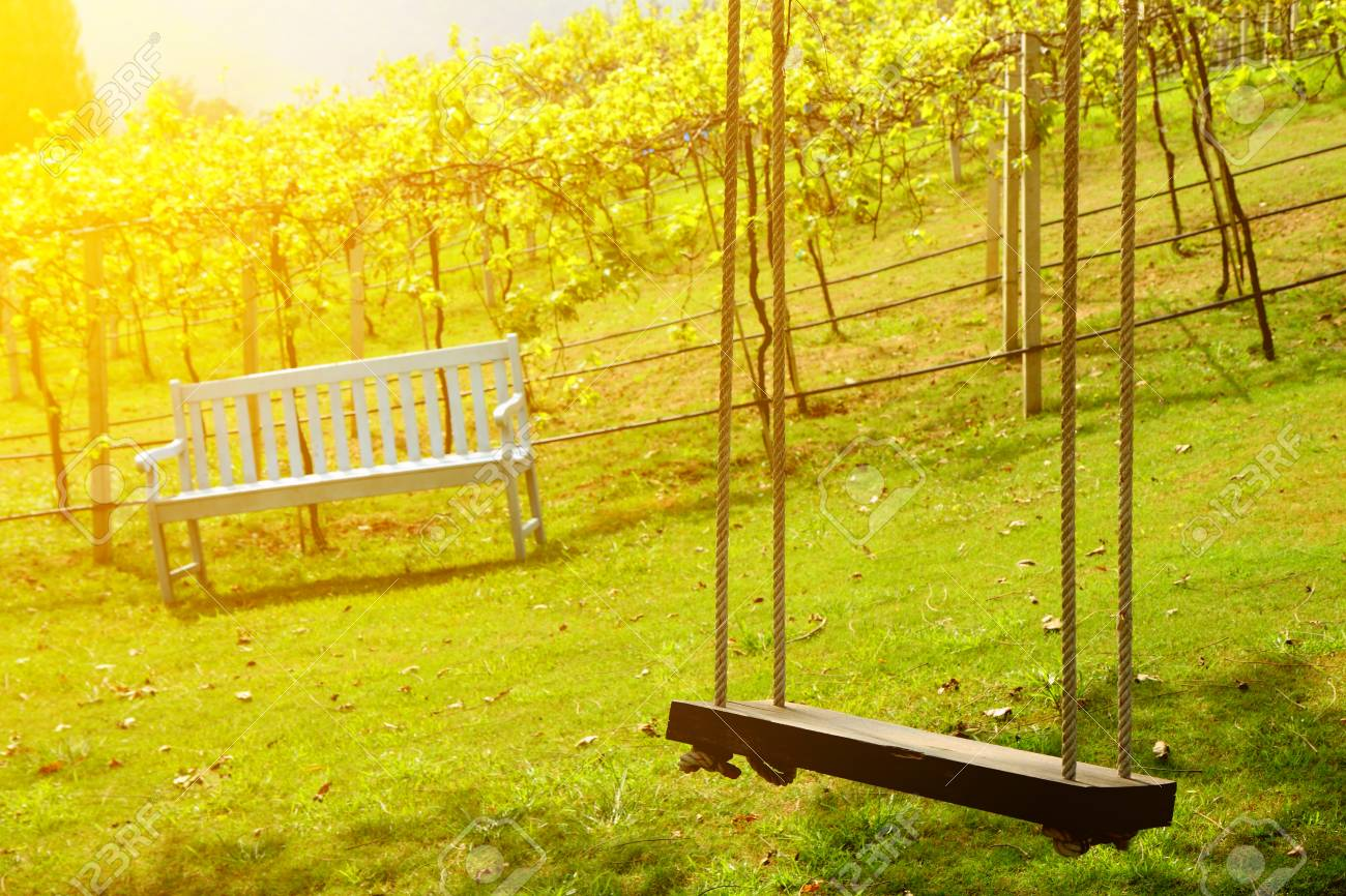 Superb Old Wooden Tree Swing And Bench In Vineyard Background At The Caraccident5 Cool Chair Designs And Ideas Caraccident5Info